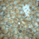 mantije sa ovcijim mesom Dijana Popovic recepti i kuvar online