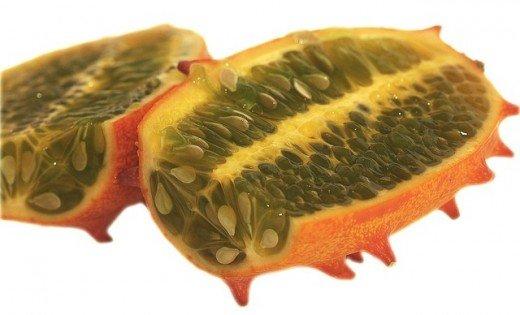 Lek iz prirode: čudesna afrička bodljikava dinja - Pixabay