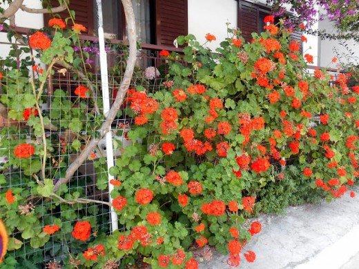 Odmor u maju - i nije tako loše - Javorka Filipović - Recepti i Kuvar online