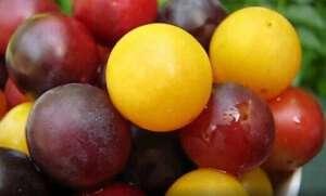 "ORGANSKO, A ZA ""DŽ"": Ovo voće raste svuda, a samo retki ga prepoznaju! - BKTV news - print screen"