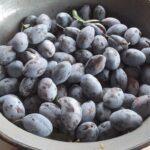 peceni dzem od sljiva stenlej bez secera Snezana Knezevic recepti i kuvar online 02