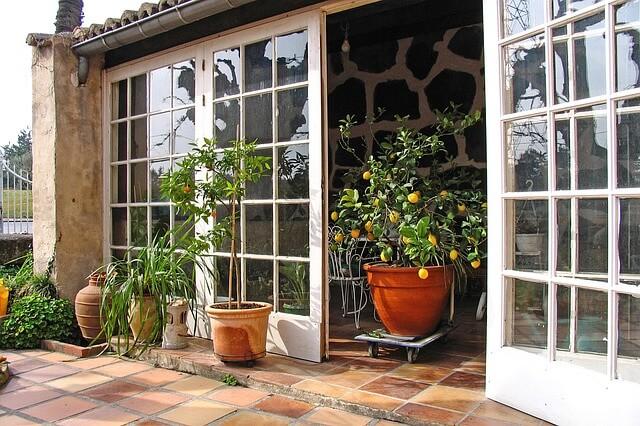 Tokom sezone grejanja, 5 biljaka koje čiste vazduh - Pixabay