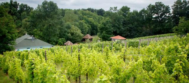 Etno restoran Kapetanovi vinogradi, Topola