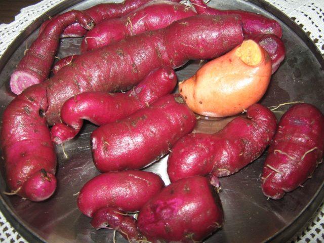 Batat slatki krompir sa maslinkama - Gvozdena Živović - Recepti i Kuvar online